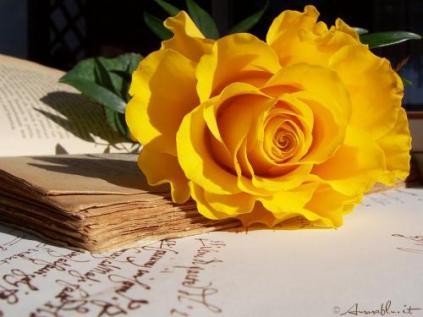 ancient_rose_1024