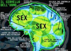 cervello_uomo2