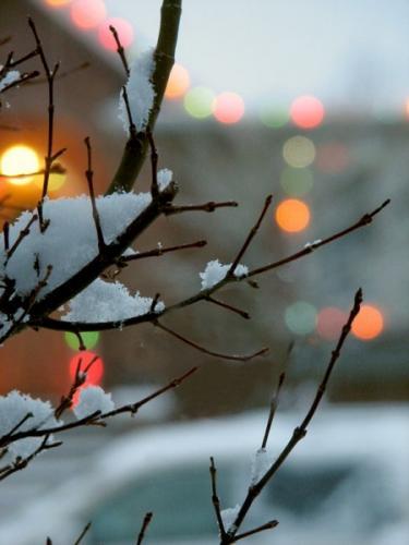 natale-rami e neve