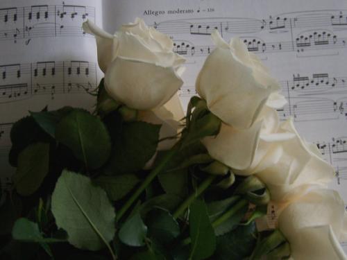 rose e musica