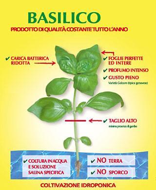 basilico_essenza di Alessandra