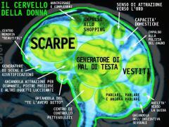 cervello_donna