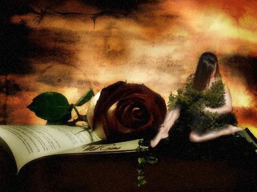 monica230402007 vorrei essere la tua rosa